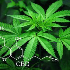 CBD- das Cannabinoid für einen klaren Kopf, innerliche Entspannung und gute Gefühle