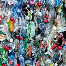Mikroplastik im Menschen